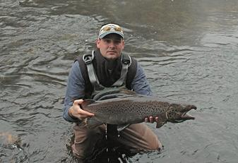 Salmon caught in the Naugatuck River